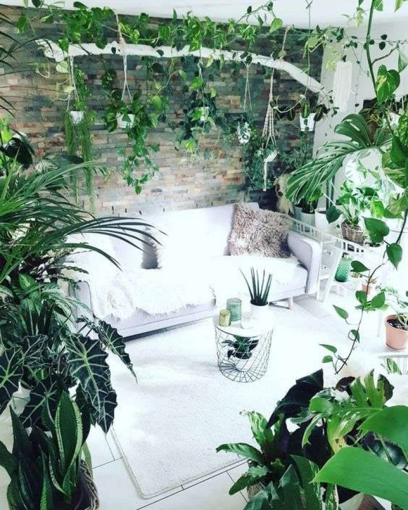 40 Beautiful Indoor Patterned Plants To Create A Lively