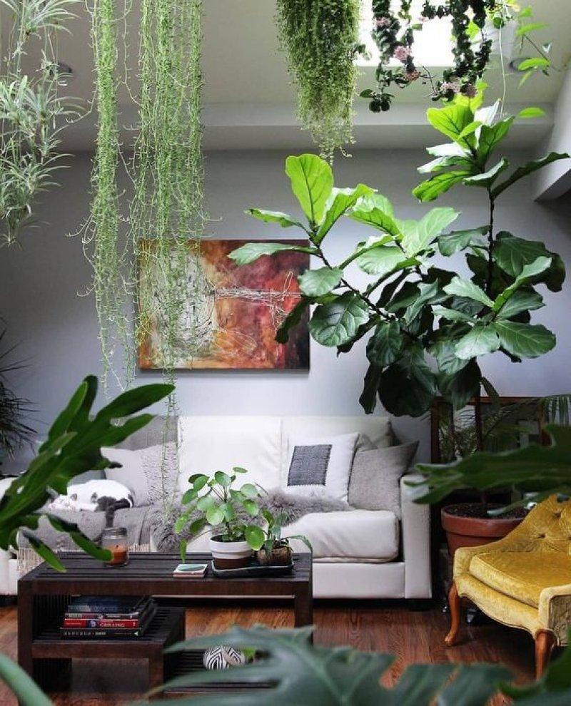 Interior Garden Design Timeless Swedish: 40 Beautiful Indoor Patterned Plants To Create A Lively